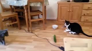 Cat Vs Cucumbers funny ???? گربه خیار